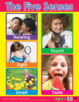 Educational Classroom Posters | PSHE 5 Senses Learning Chart