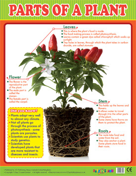 Educational School Posters | Parts of a Plant Chart for KS2
