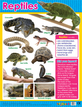Educational Classroom Posters | Reptiles Learning Chart