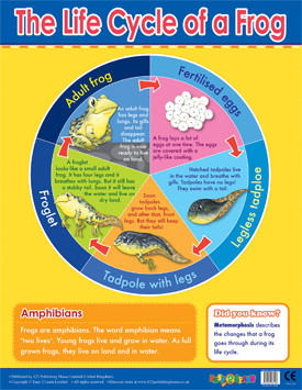 Educational Classroom Posters | Frog Lifecycle Learning Chart