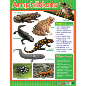 Educational Classroom Posters | Amphibians Learning Chart