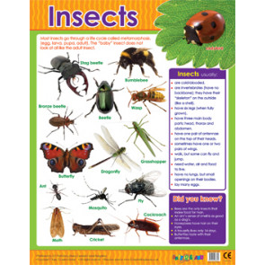 Educational Classroom Posters | Insects and Bugs Learning Chart
