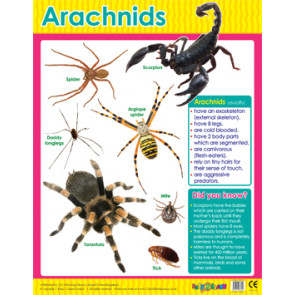 Educational Classroom Posters | Spider (Arachnids) Learning Chart