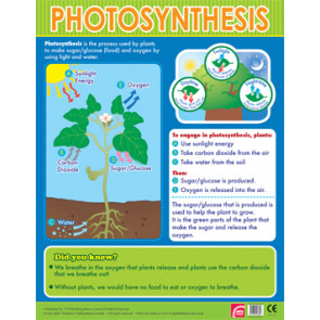 Educational School Posters | Photosynthesis Learning Chart