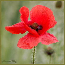 Lest We Forget: How to Learn About the First World War in the Primary Classroom
