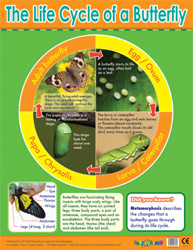 Educational Classroom Posters | Butterfly Lifecycle Learning Chart