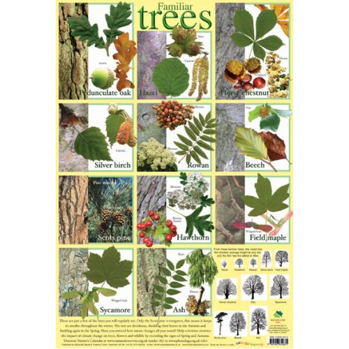 educational posters for children familiar trees chart poster