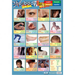 School Poster | Learn the body in 4 Languages