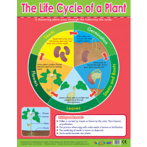 Educational School Posters | Plant Life cycle Learning Chart