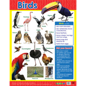 Educational Classroom Posters | Birds Learning Chart